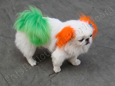 Fashion China on Very Fashion China 8  Dyed Pooches     This Ridiculous World